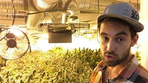 Cultivateur de cannabis bio : la prochaine profession à succès?