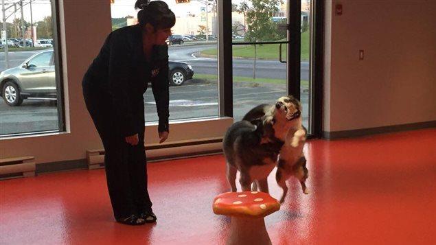 Cynthia supervise le jeu entre Paco et Cooper. Les chiens passent par une période d'intégration avant de retrouver d'autres chiens.