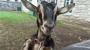 À la rencontre de l'âne du Vieux-Québec