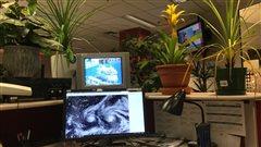 Les bienfaits des plantes vertes au travail