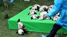 Un nouvel espoir pour sauver les pandas