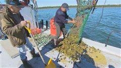 Profession:pêcheur d'oursins