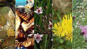 Cinq espèces envahissantes menacent l'écosystème de l'Alberta.