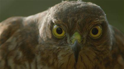 La vitesse de certains oiseaux est une arme redoutable
