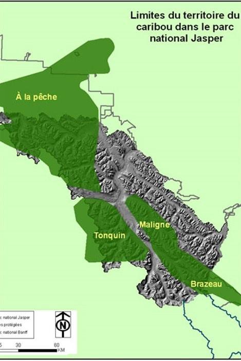 Limites du territoire du caribou dans le parc national Jasper.