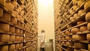 Une employée en sarrau blanc inspecte des meules sur une très haute étagère à fromages.