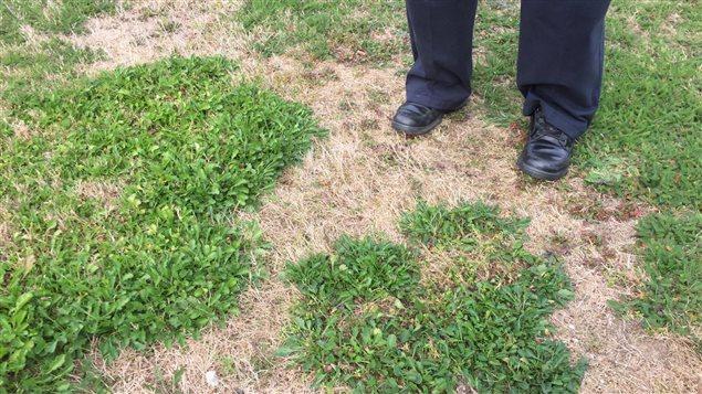 Les effets de la sécheresse sont encore perceptibles dans le sud-ouest de la Nouvelle-Écosse.