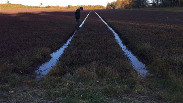 La récolte est pour bientôt à la ferme Les jardins de la prairie.