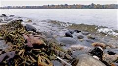 Impact des déversements d'eaux usées dans la rivière du Lièvre