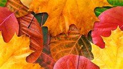 Expliquer les couleurs d'automne