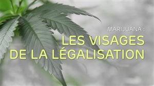 Image d'une feuille de cannabis suivit du titre Marijuana : Les visages de la légalisation