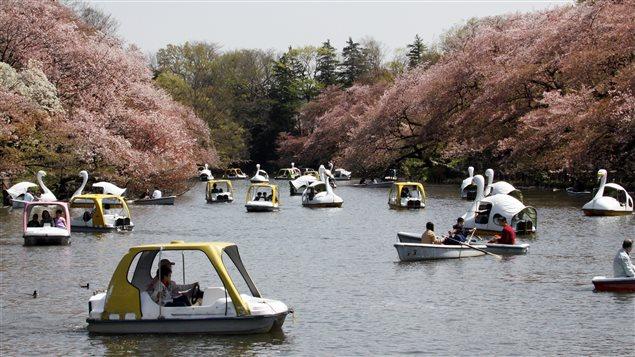 Des barques et des pédalos sur un lac