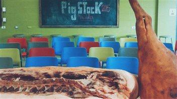 Le porc mangalitza en vedette lors de l'événement Pigstock 2016