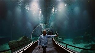 Ouverture le 9 novembre du plus grand aquarium d'Amérique du Sud à Rio de Janeiro