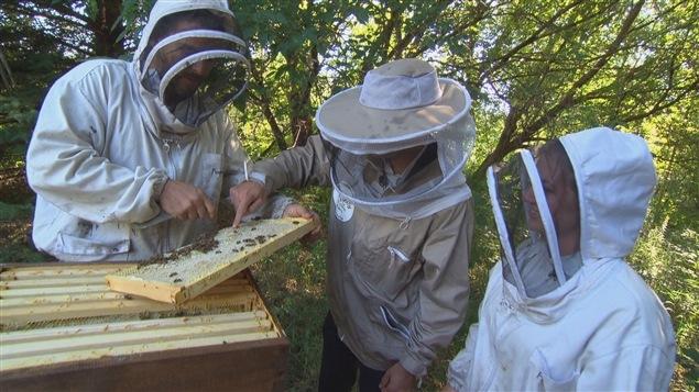 Louez une ruche et gardez le miel!