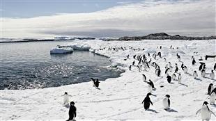 Création du plus grand sanctuaire marin du monde en Antarctique