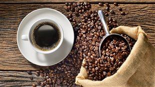 Le café sous toutes ses facettes