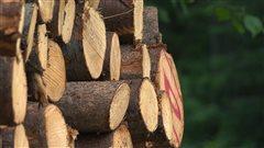 Un chapitre sombre pour le bois d'oeuvre