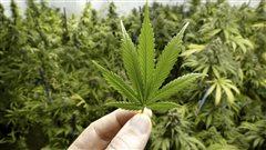 La chimie du cannabis