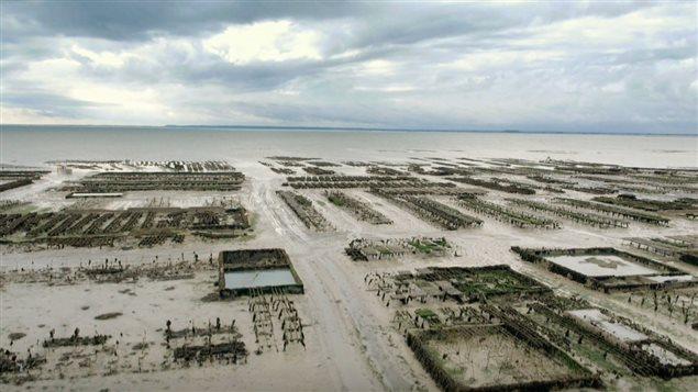 La baie de Cancale en France est reconnu pour sa production d'huîtres.