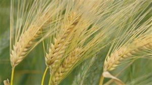 C'est en 2013 que le glas sonne définitivement pour les OGM en Europe.