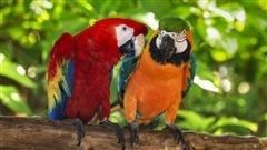 La longévité souvent étonnante des oiseaux