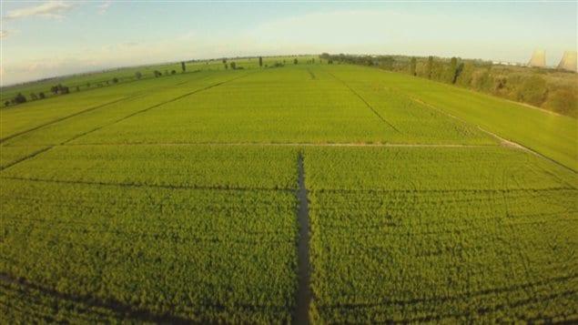 L'Italie compte près de 4000 exploitations rizicoles.
