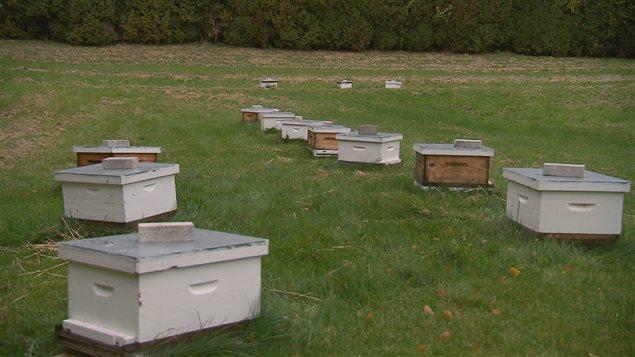 Le centre de recherche en sciences animales près de Québec est un important lieu de recherche en apiculture.