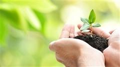 L'impact bénéfique pour l'environnement des organismes de conservation