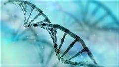 Bientôt, des disques durs à base d'ADN