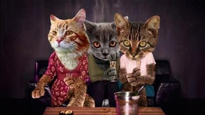 Et si les chats faisaient de la télé... chat donnerait quoi?