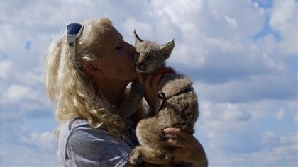 Kamik, le bébé lynx, se fait éduquer par un chien