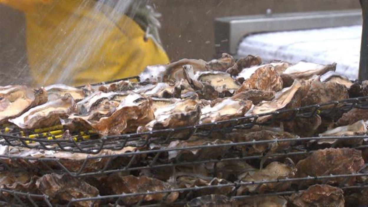 Les huîtres menacées par l'acidification des océans