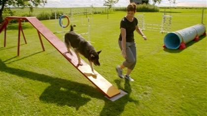 Des vidéos exclusives pour comprendre davantage les animaux