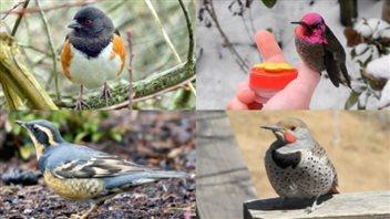 Quel sera le prochain oiseau de Vancouver?