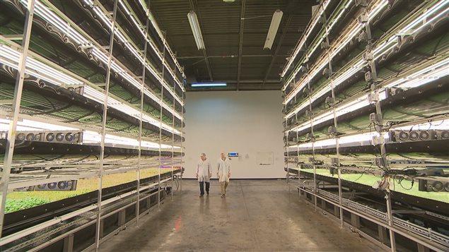 À travers le monde, les fermes verticales se multiplient.