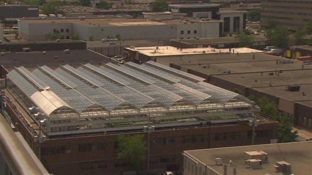 Les toits des immeubles fournissent des surfaces en pleine ville, à proximité des consommateurs.