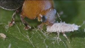 Les insectes pourraient être nos meilleurs alliés dans la lutte contre leurs semblables.
