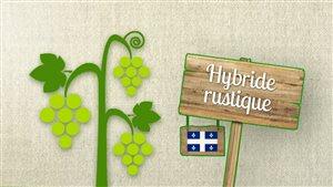 Capsule chiffrée sur la production de vins au Québec.