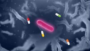 Illustration d'une bactérie résistante aux antibiotiques.
