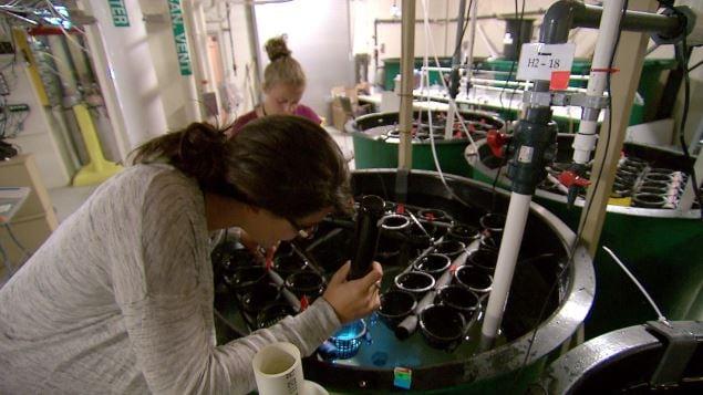 Travaux sur l'acidification des océans