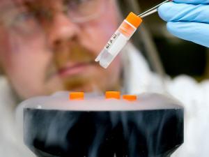 Cellules souches embryonnaires