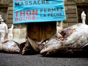 Manifestation de Greenpeace pour l'interdiction du thon rouge devant le ministère français de l'Agriculture, à Paris, en novembre 2008.
