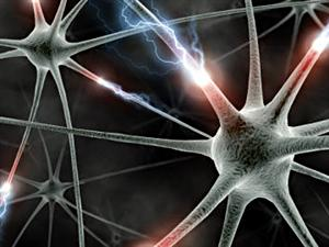 neurones-synapses