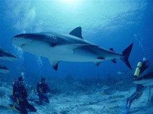 Nager avec les requins en Afrique