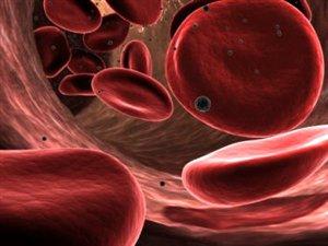 Une représentation de globules rouges dans un vaisseau sanguin