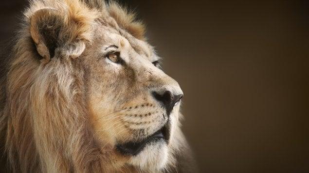 Quand le roi dispara t ici radio - Tete de lion a dessiner ...