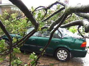 Un arbre est tombé sur une voiture à Montréal.