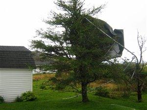 Une trampoline s'est retrouvée sur l'arbre d'un voisin après le passage de l'ouragan Maria.