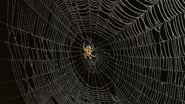 L 39 araign e cette architecte ici radio - Maquillage toile d araignee ...